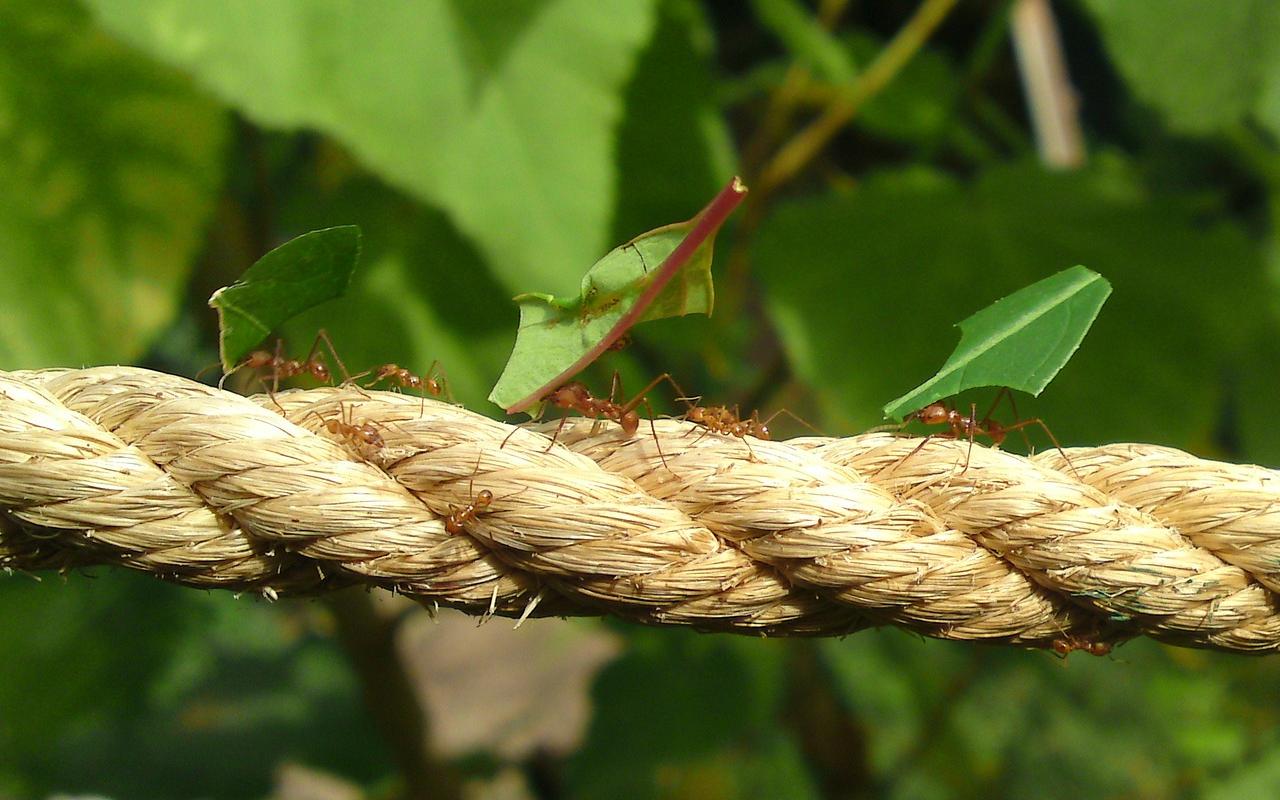 un travail de fourmis : un travail invisible